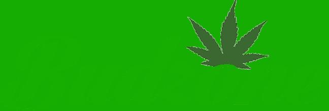 BudZone Coupon Codes - Mail Order Cannabis Marijuana - Canada - Save On Cannabis