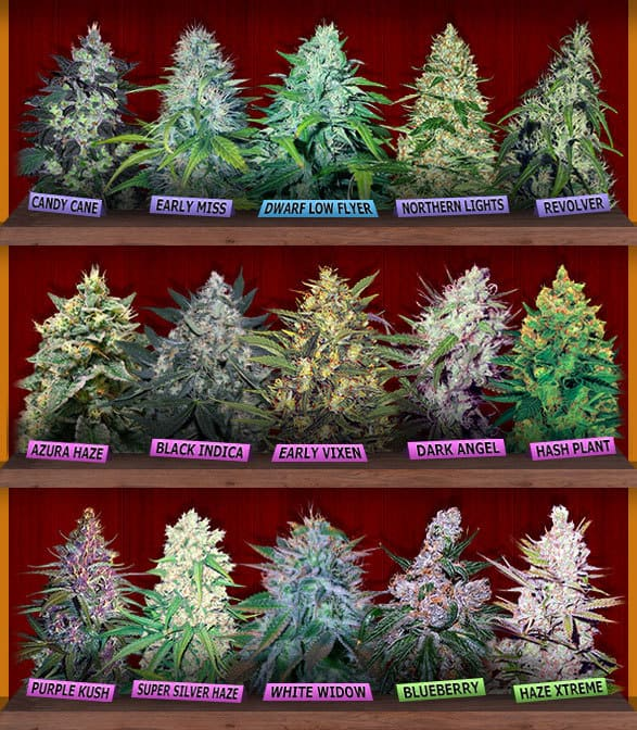 Crop King Seeds Store Discount Coupon Promo Certificate Offer1