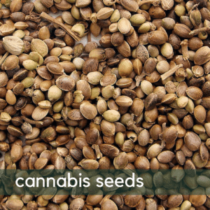 cannabis_seeds_coupon_Codes_save_on_Cannabis_online_Marijuana