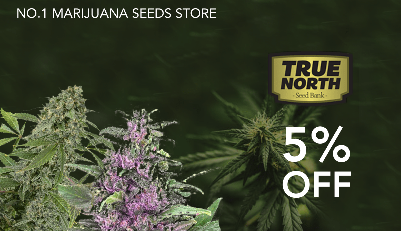 True North Seed Bank Coupon Code Online Discount Save On Cannabis Redesign