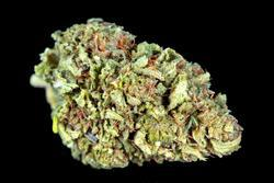 CBDDY Coupon Code Online Discount Save On Cannabis