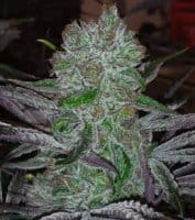 CannaPot Coupon Code Online Discount Save On Cannabis