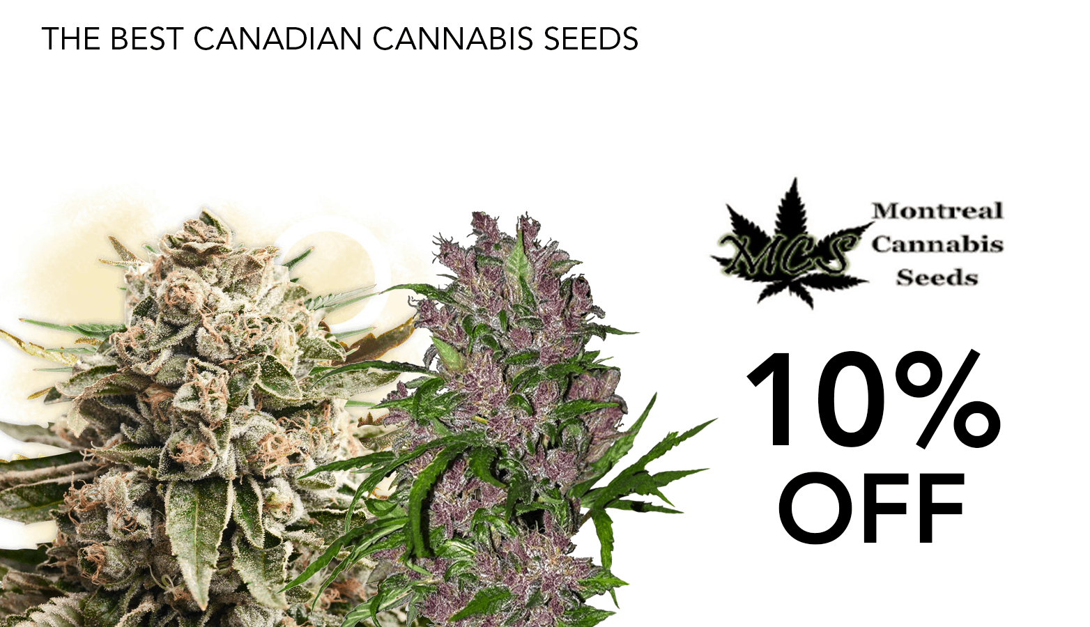 Montreal Cannabis Seeds Coupon Code Online Discount Save On Cannabis Redesign