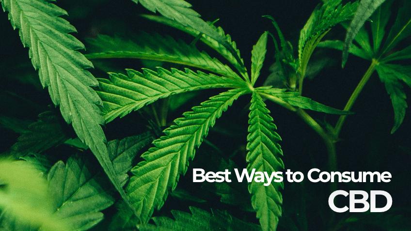 Best Ways to Consume CBD