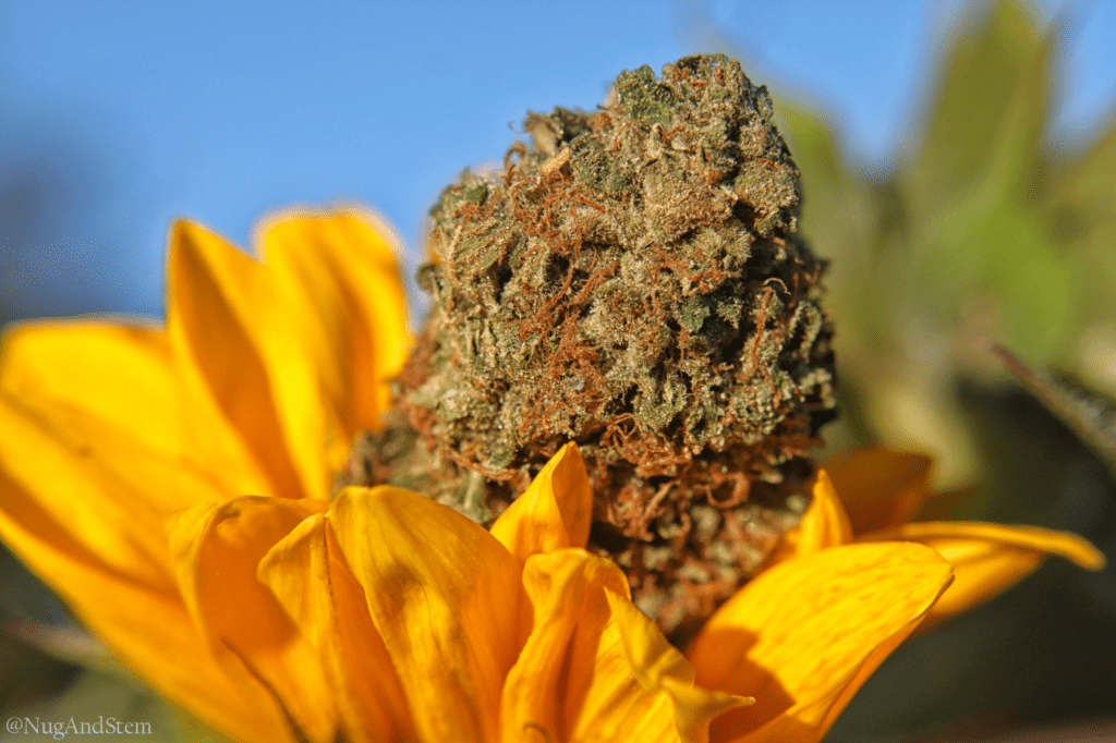 Get Kush Mail Order Review Tom Ford - Save On Cannabis Online