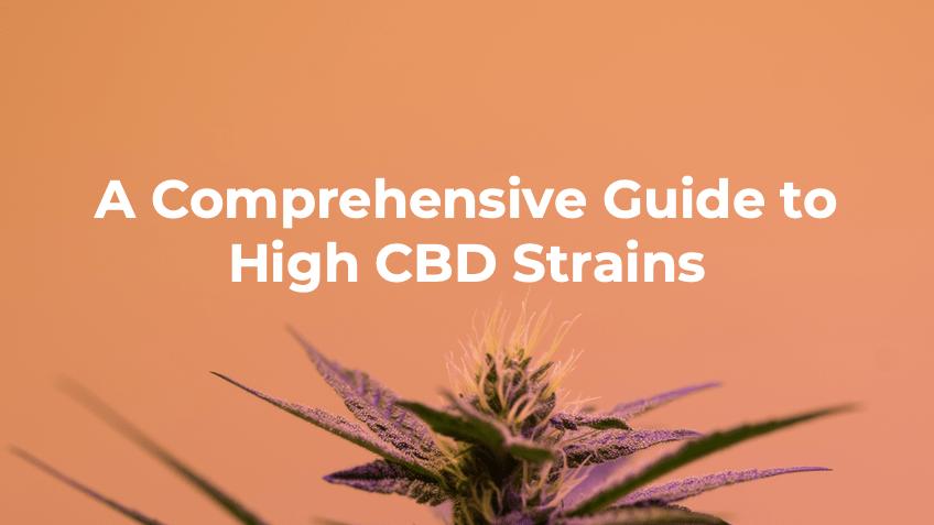 Guide to High CBD Cannabis Strains - Blog