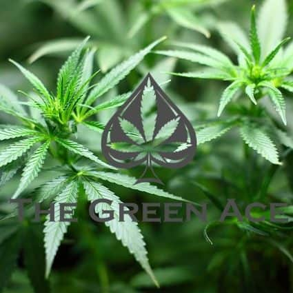 The Green Ace Coupon Code Online Discount Save On Cannabis