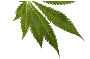 EcoLife Coupon Code discounts promos save on cannabis online Store19