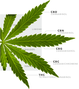 EcoLife Coupon Code discounts promos save on cannabis online Store9