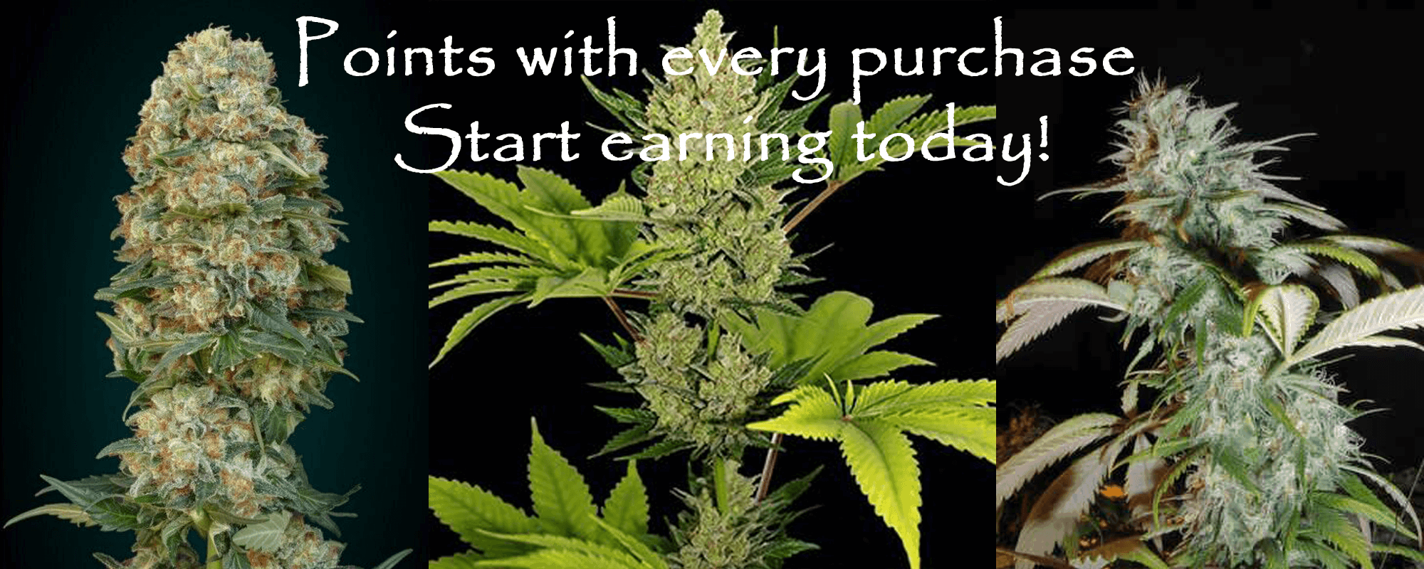 Coffee Shop Seeds Coupon Code discounts promos save on cannabis online Store5