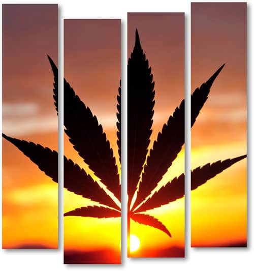 Speed Greens CBD Coupon Code discounts promos save on cannabis online Store28