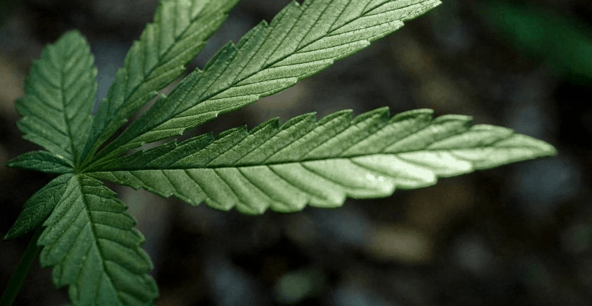 Cannabidolpharm Ltd CBD Coupon Code discounts promos save on cannabis online Store3