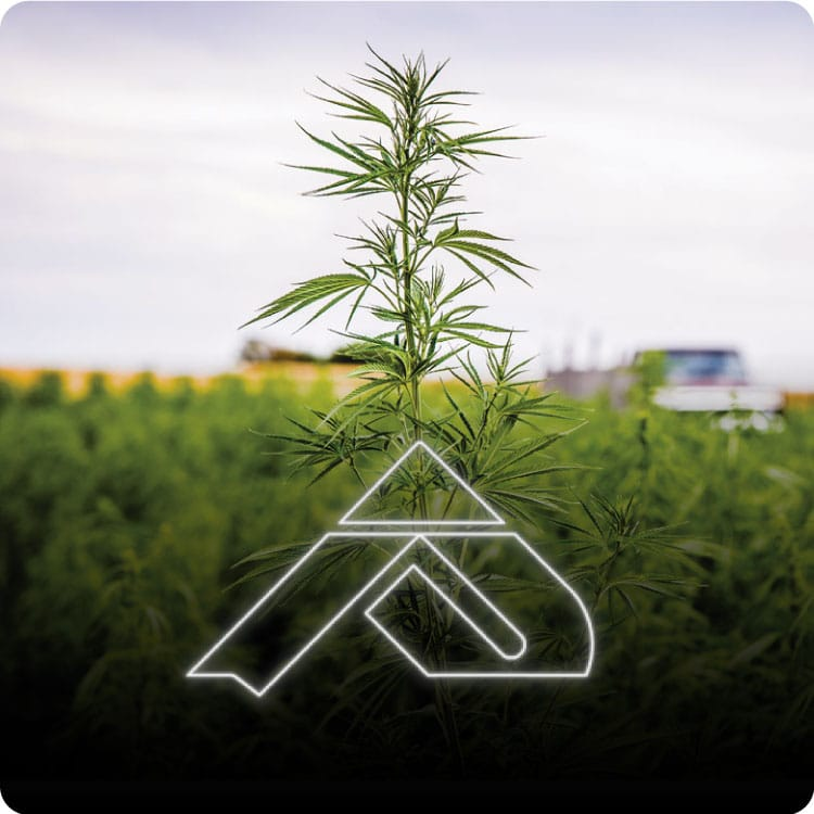 Pinnacle Hemp CBD Coupon Code discounts promos save on cannabis online Store14