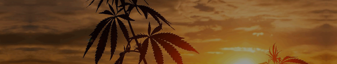 sunset with cannabis planet wallpaper