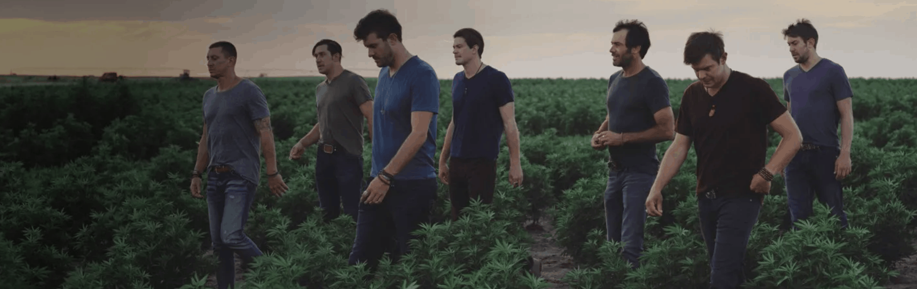 group of Charlottes Web employees walking in cannabis field