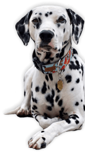 CBD Dog Health Coupon Code Hero