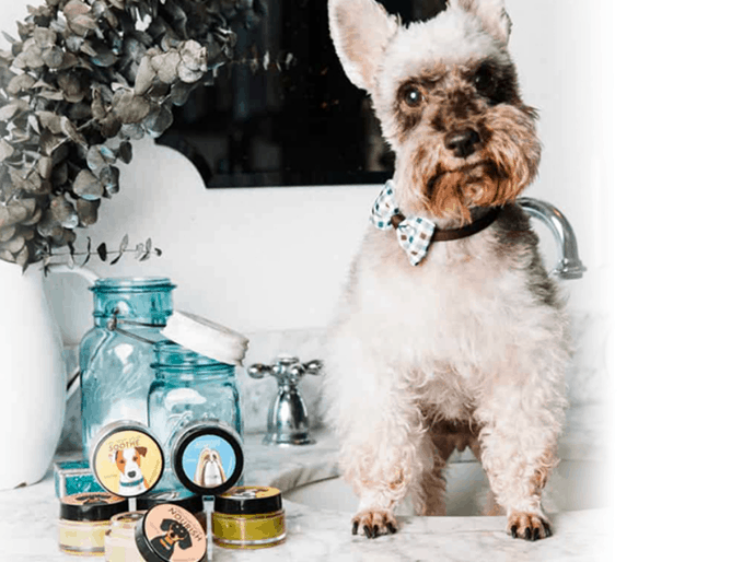 CBD Dog Health Coupon Code Salves