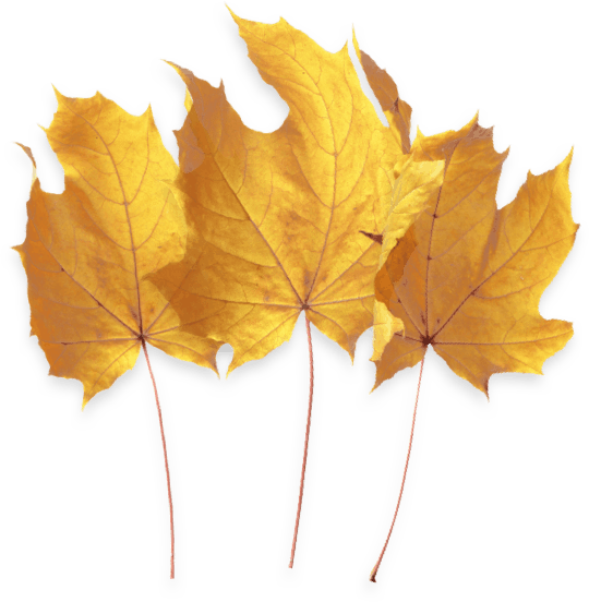 Flora CBD Coupon Code Leaf