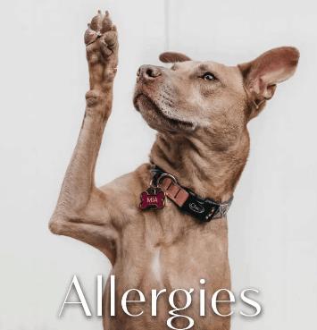 Greenwell Pet Box CBD Coupon Code Allergies