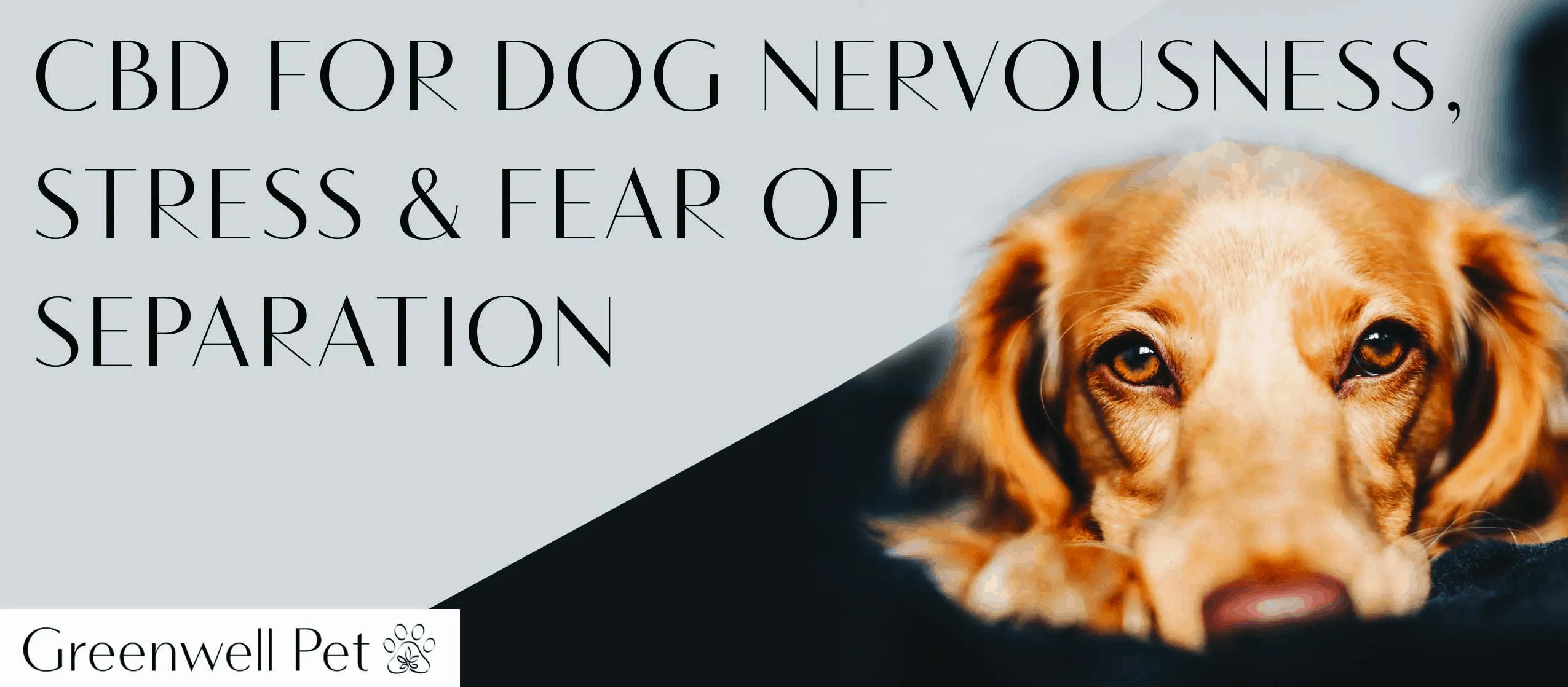 Greenwell Pet CBD Coupon Code Dog's Nervousness