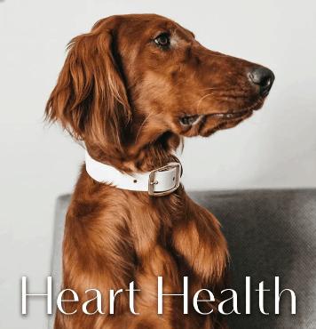 Greenwell Pet CBD Coupon Code Healthy Heart