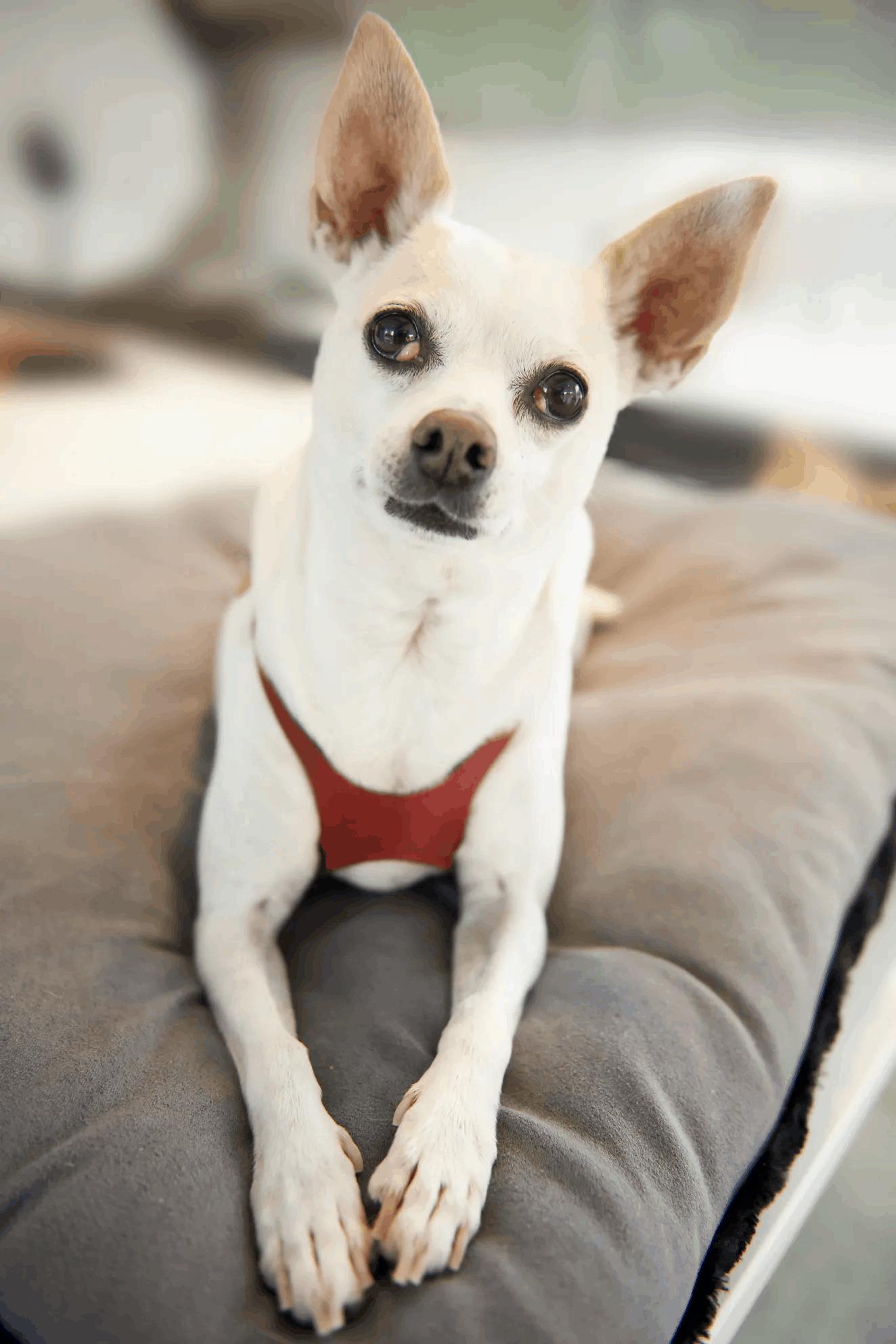 Greenwell Pet CBD Coupon Code Pet Friendly