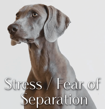 Greenwell Pet CBD Coupon Code Stress