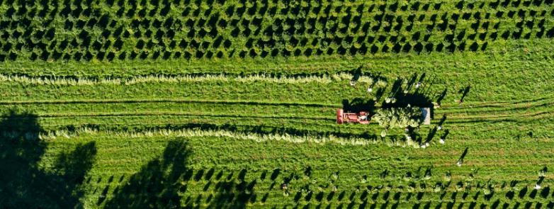 Sunsoil CBD Coupon Code Farms View