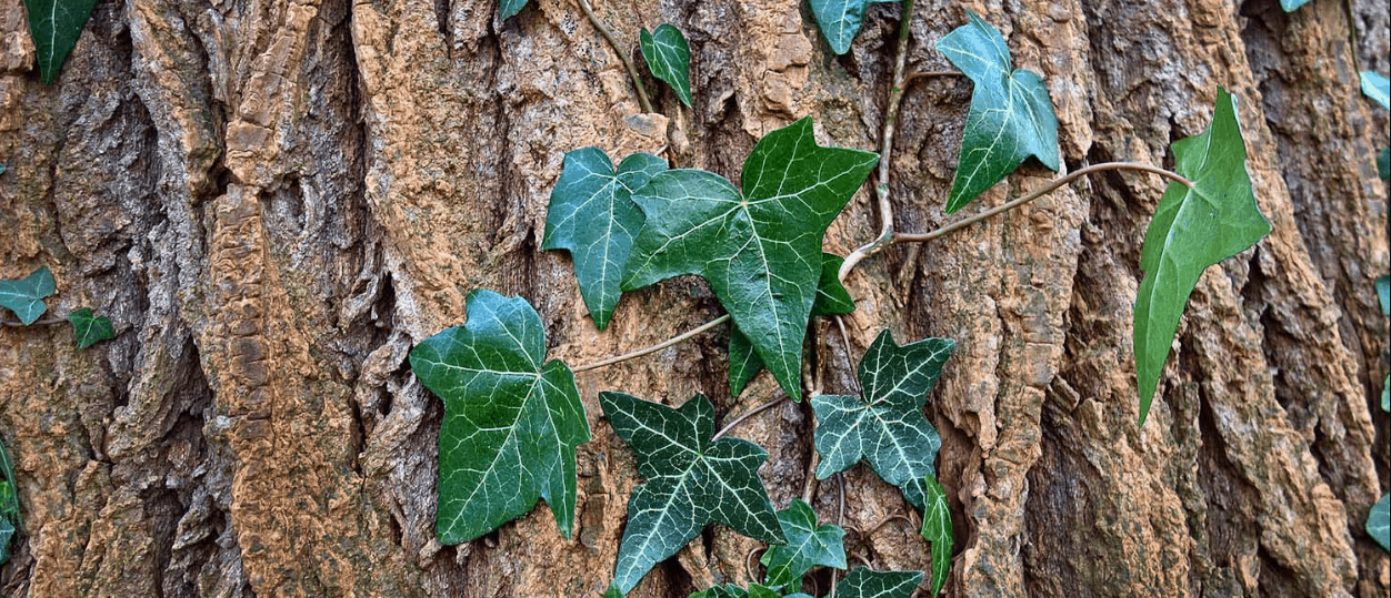 Tree of Life Botanicals CBD Coupon Code Facts