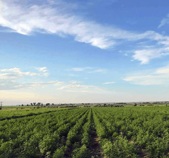 Tree of Life Botanicals CBD Coupon Code Farms
