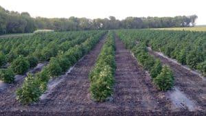 Amberwing Organics CBD Coupon Code About