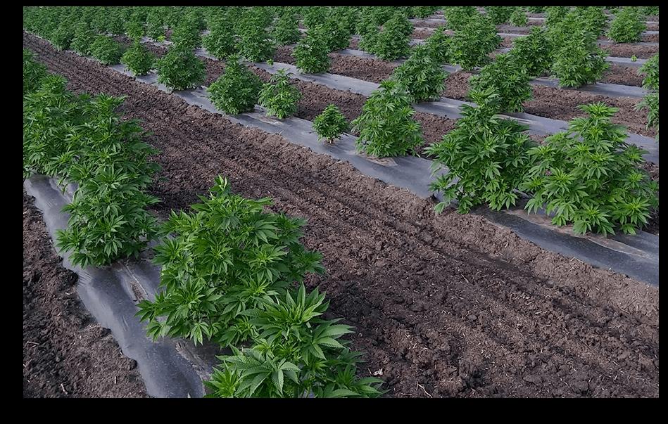 Amberwing Organics CBD Coupon Code Farm