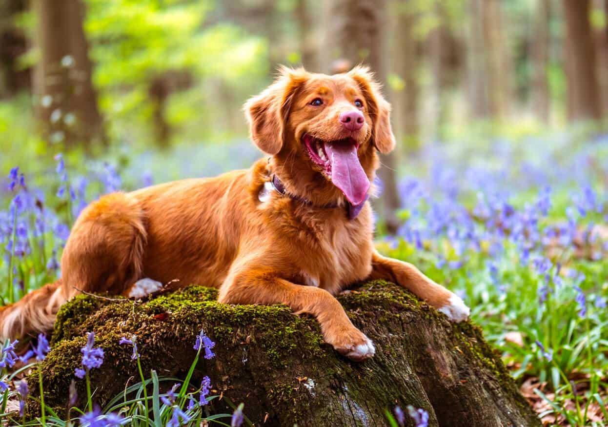 Holistic Pets CBD Coupon Code Decrease Anxiety