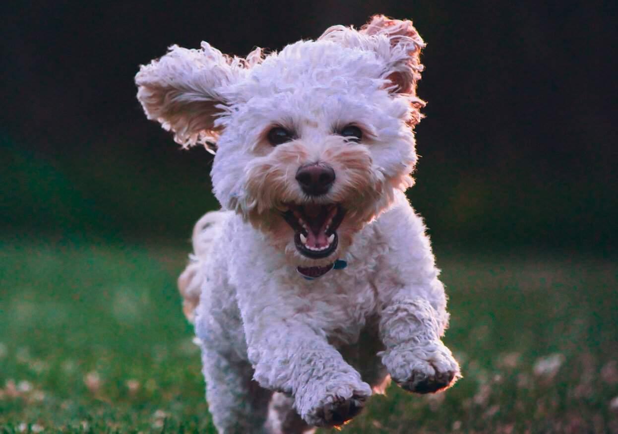 Holistic Pets CBD Coupon Code Improve Longevity