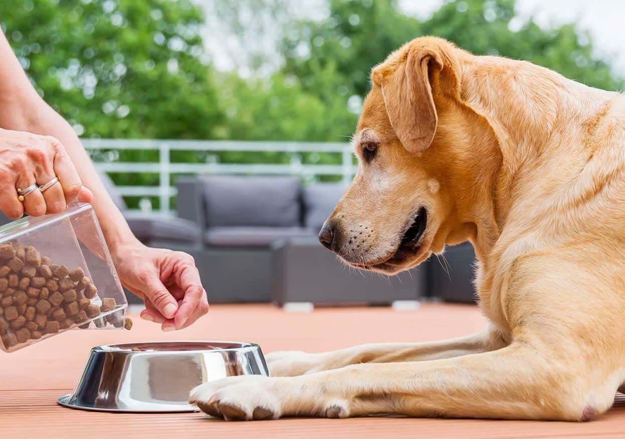 Holistic Pets CBD Coupon Code Increase Appetite