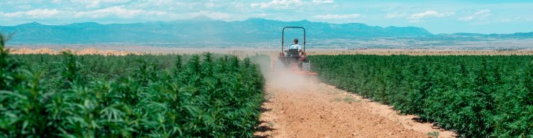 Veritas Farms CBD Coupon Code Baby Plant