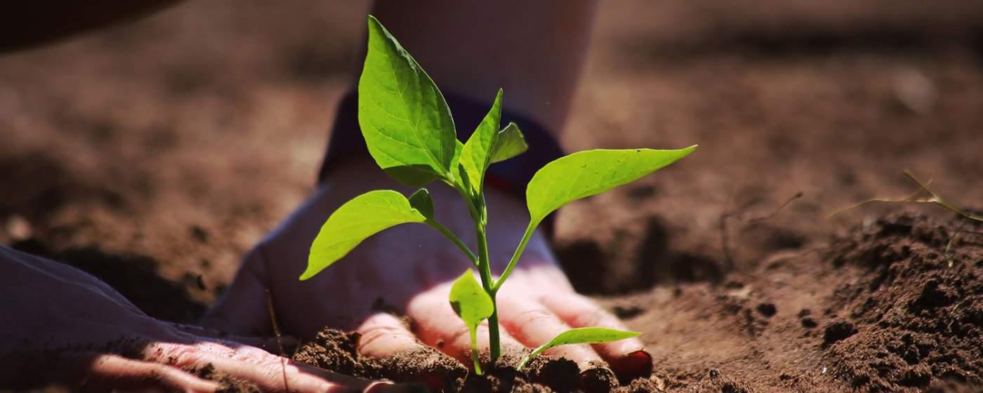 WOW Organics Cannabis Coupon Code Our Guarantee
