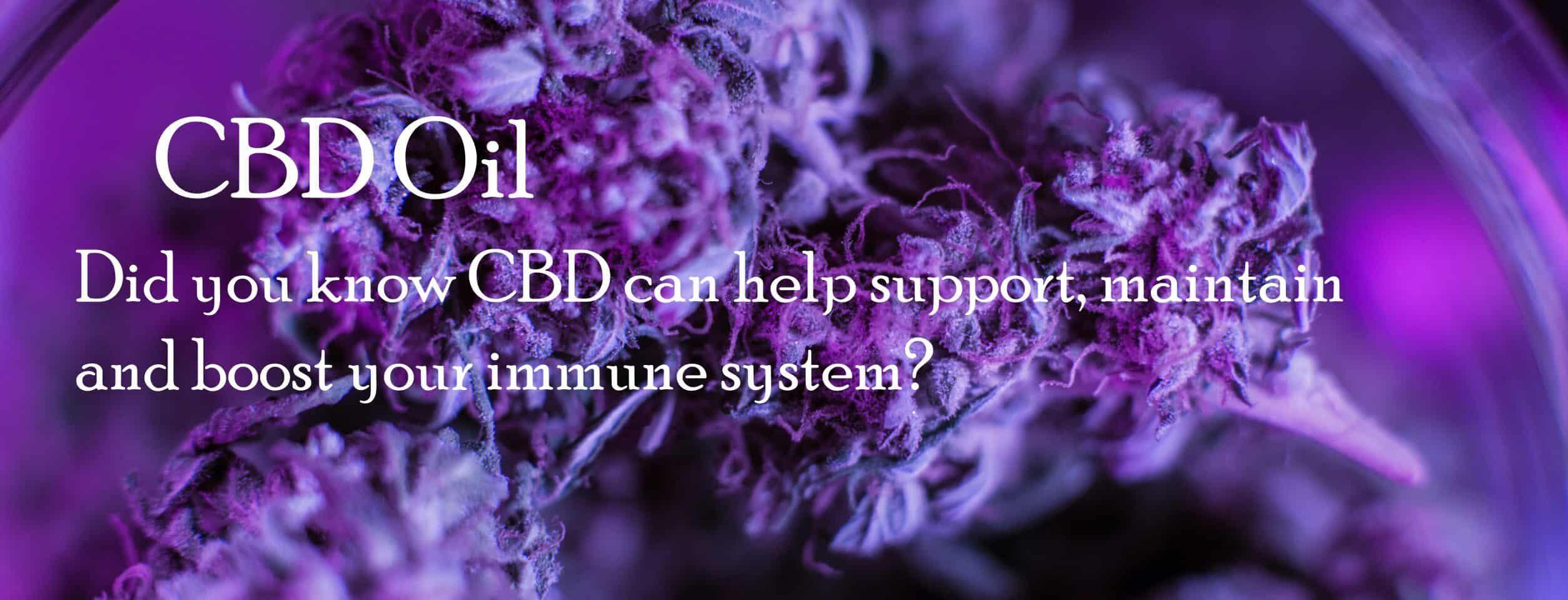 CBDLavita Coupon Code Boost Immune System