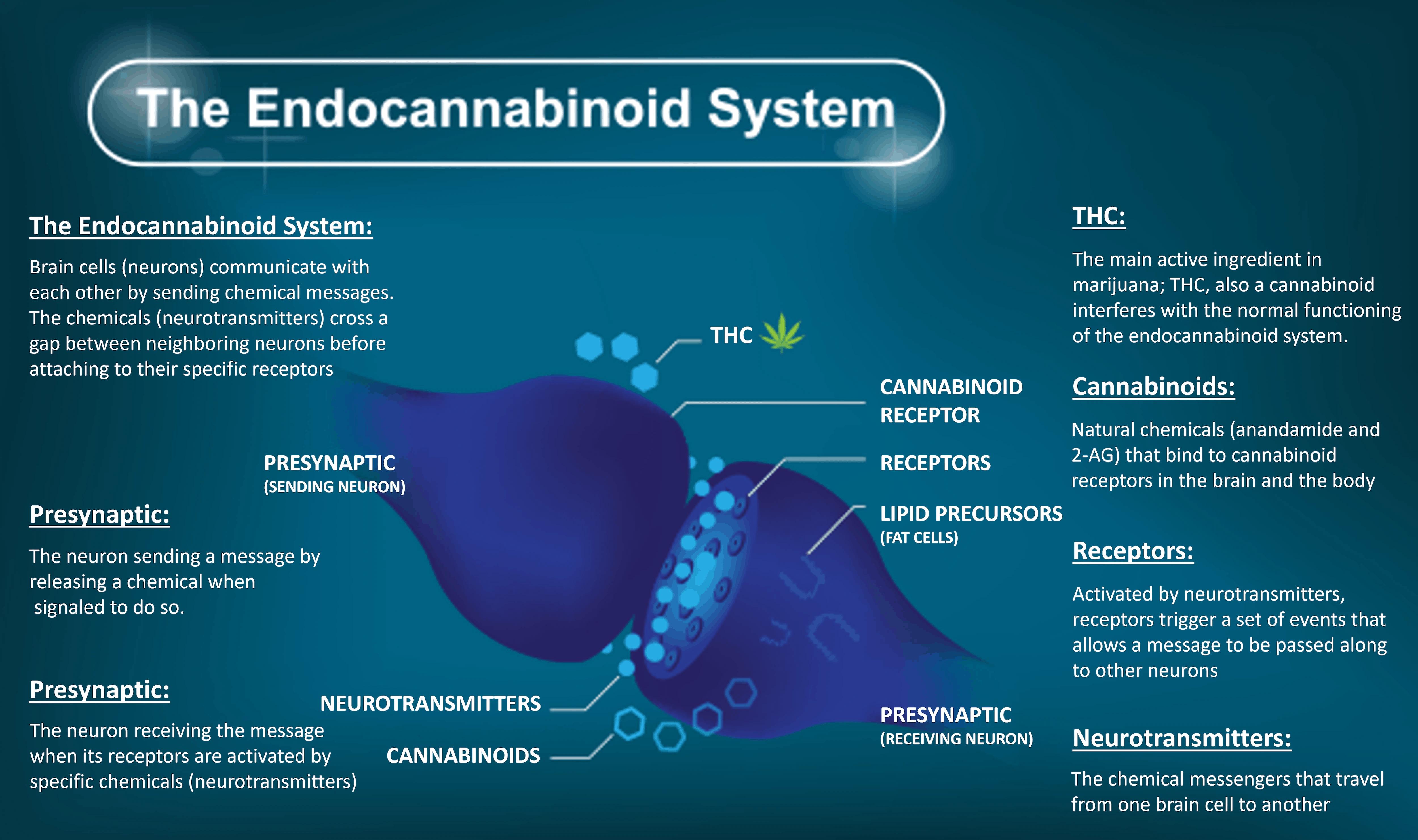 CBDLavita Coupon Code Endocannabinoid System
