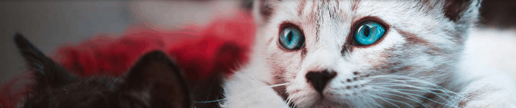 Essential CBD Coupon Code Product For Cats