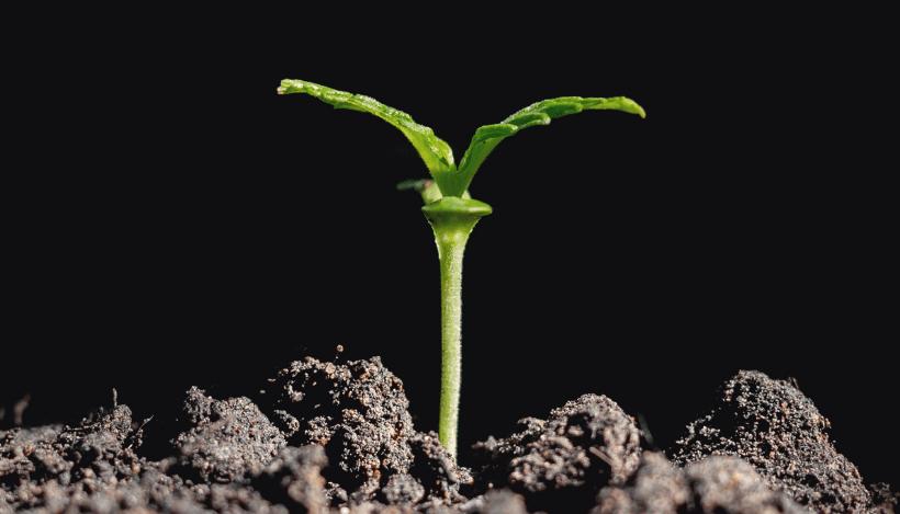 Kootenay Botanicals CBD Coupon Code Plant