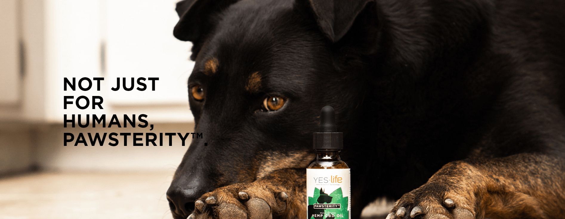 Yes.Life CBD Coupon Code Pet Products