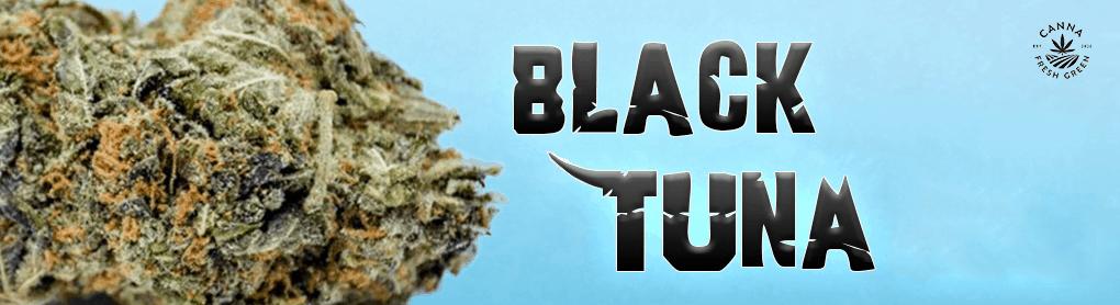 Canna Fresh Green Cannabis Coupons Black Tuna