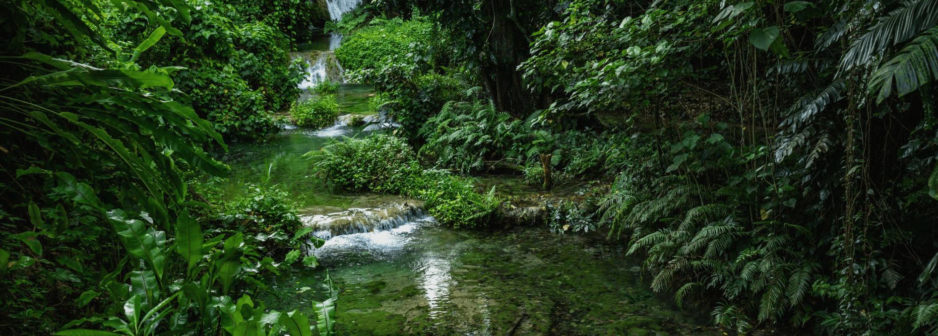 We Created TEADORA CBD For You For Rainforest