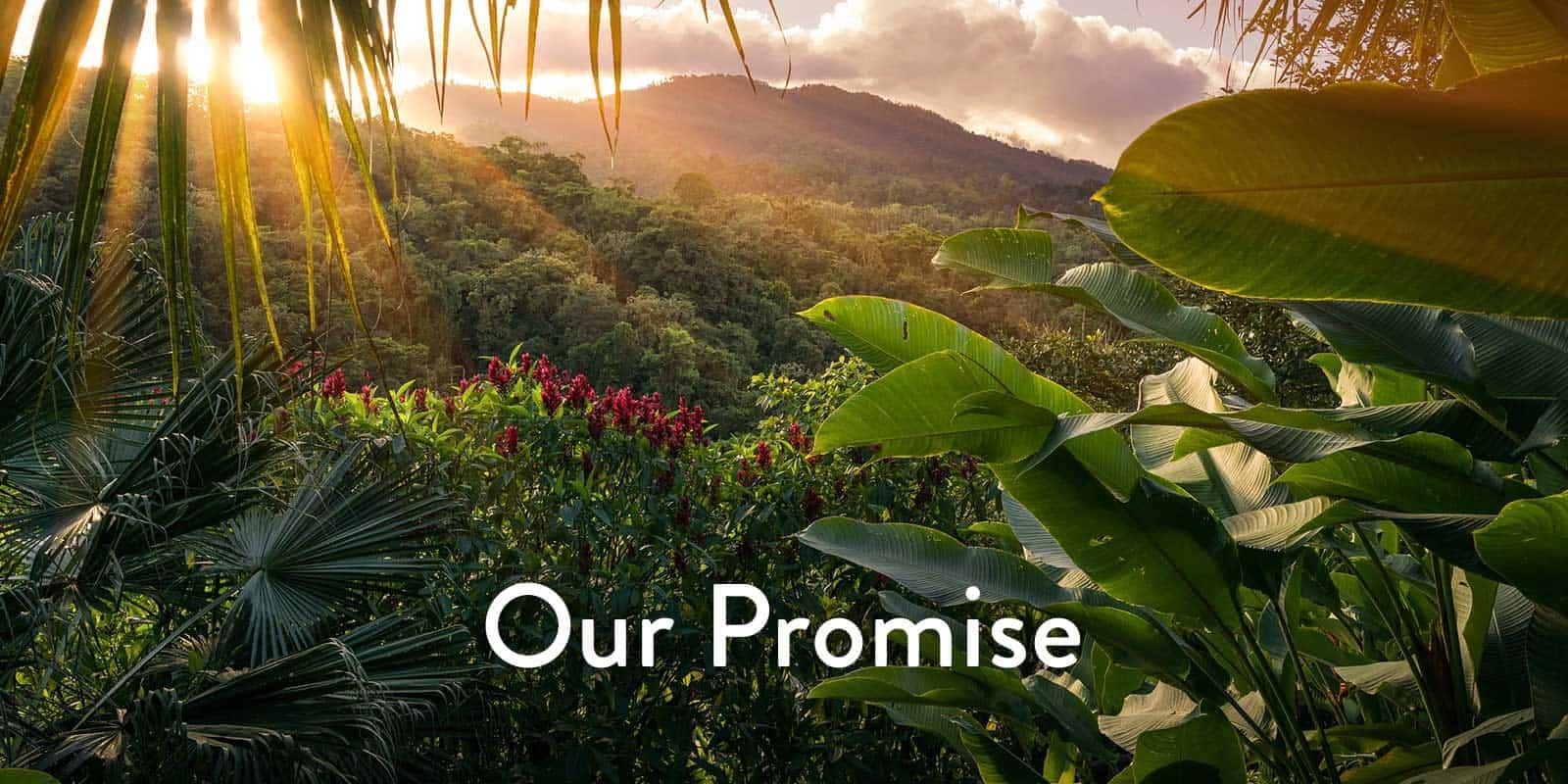 TEADORA CBD Coupons Promise We Do