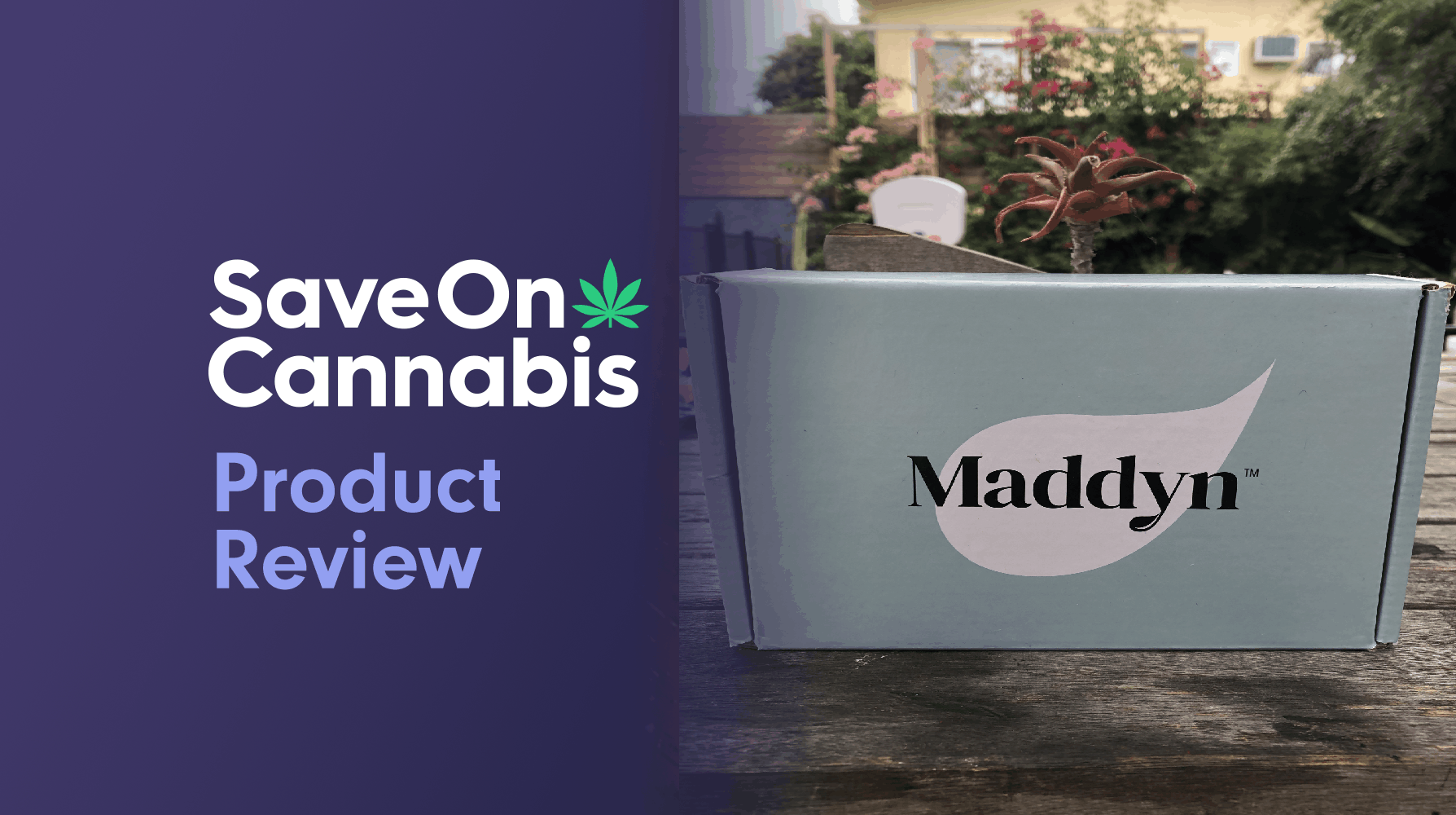 maddyn renew and recharge cbd topical crème save on cannabis review website