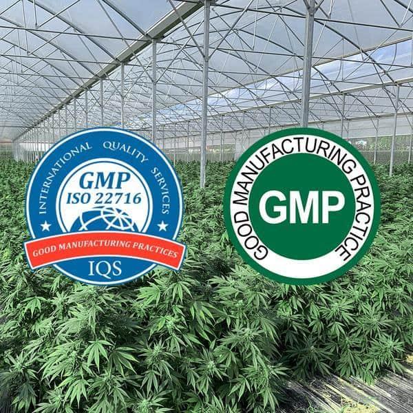 Formula Swiss CBD Coupons GMP Certified