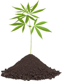 Miracle Seed CBD Coupons Organic