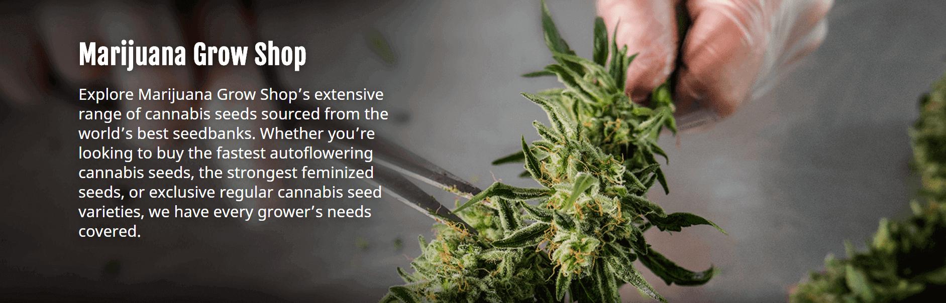 Marijuana Grow Shop Seeds Coupons Info