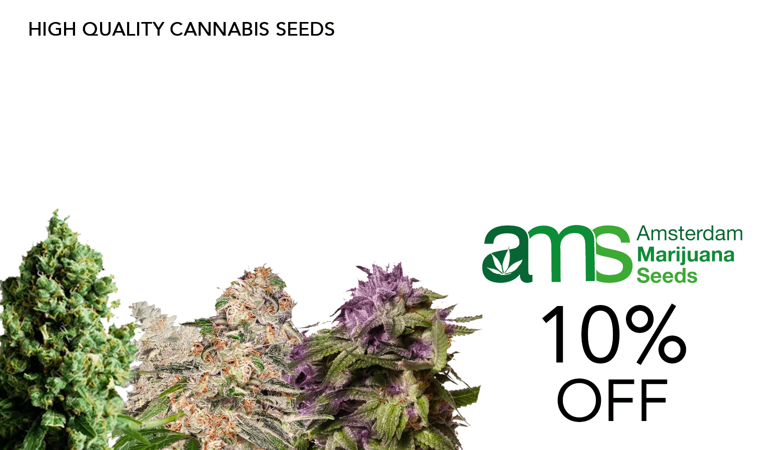 Amsterdam Marijuana Seeds Coupon Code Offer Website